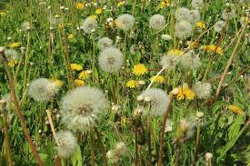 Hayfever and Homeopathy